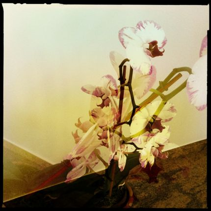 Inspiring Moment: Sensuous Orchid