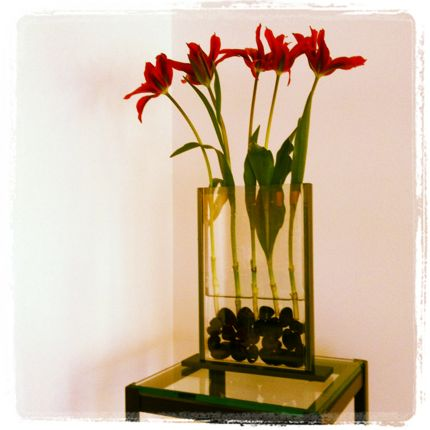 Inspiring Moment: Red Tulips