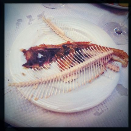 Remains: Fish skeleton and skin