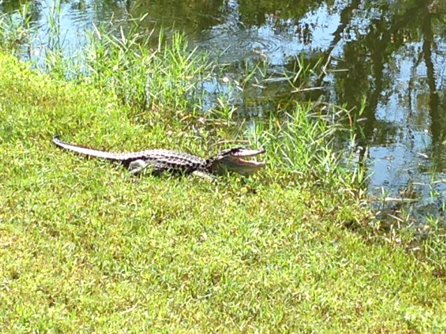 Inspiring Moment: Five More Minutes With Florida Alligator
