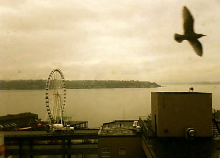 Puget sound cam seagull five more minutes with website