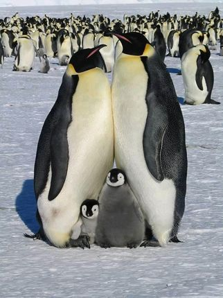 Penguin family five more minutes with website link